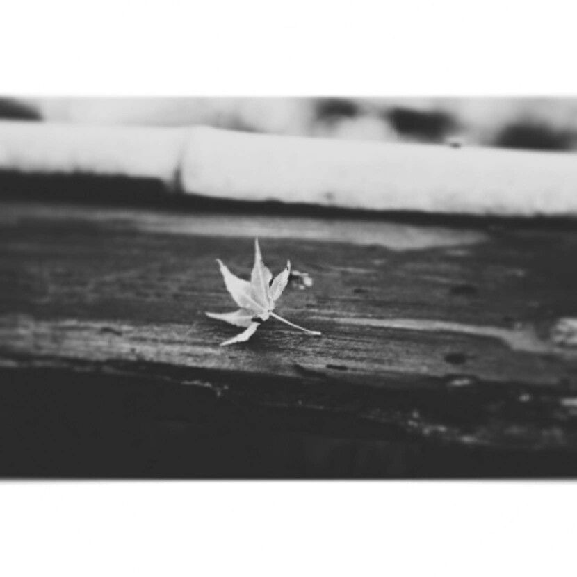 `leaf` me alone