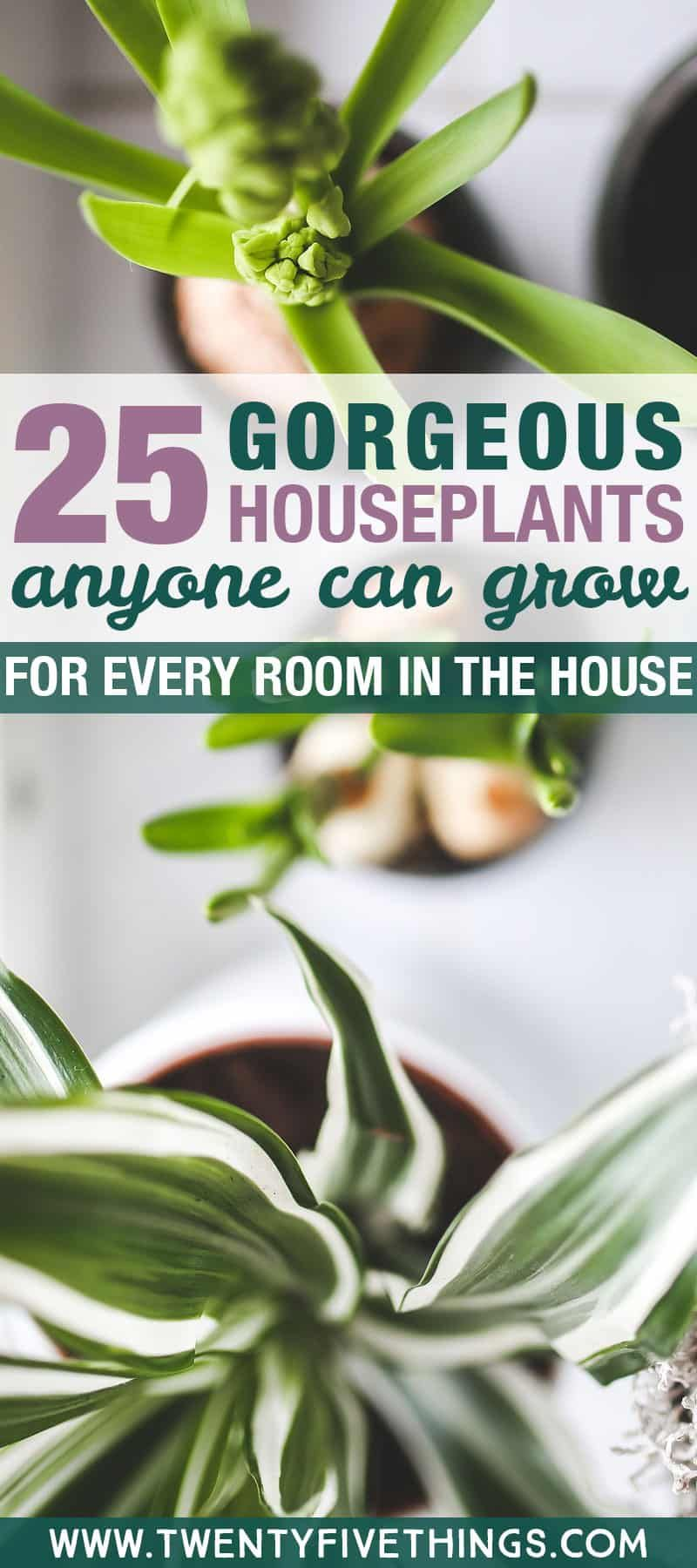 25 Gorgeous Plants To Grow Indoors Gardening Growing 400 x 300