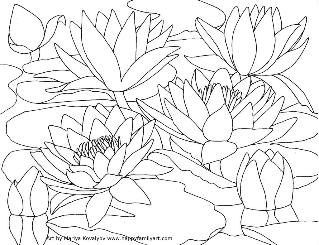 Waterlilies Happy Family Art Water Lily Drawing Lilies Drawing Flower Coloring Pages