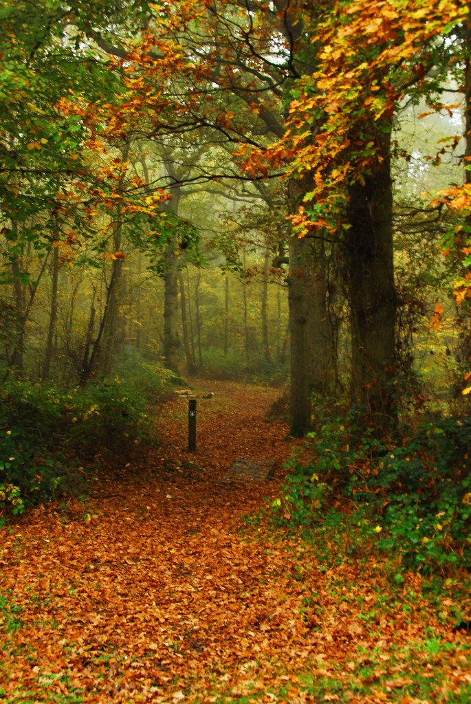 AUTUMN IN Park Wood, Appledore, Kent, England