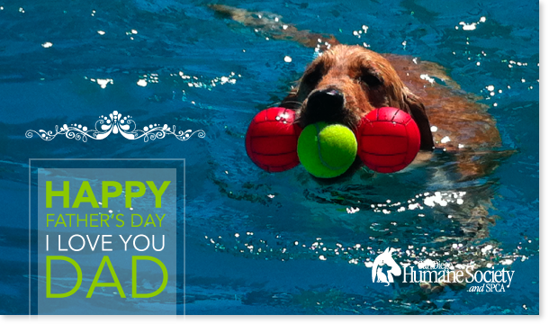 Fathers Day - Dog in pool
