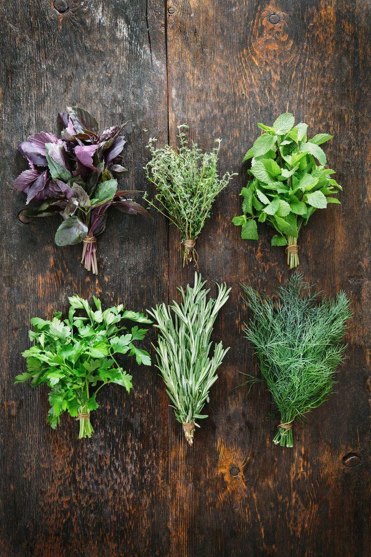 пятна фото пряных растений с названиями и цветами новых