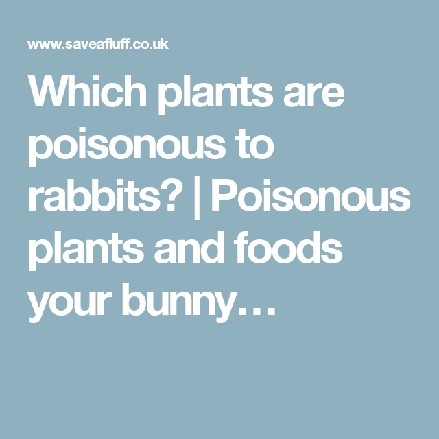 Which plants are poisonous to rabbits? | Poisonous plants and foods your bunny…