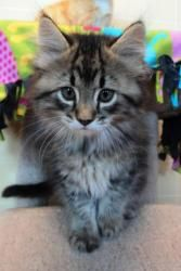 Adopt Quincy On Cats Kittens Cute Baby Animals Kittens Cutest