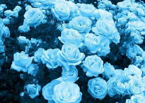 blue aesthetic image by april estillero on blue