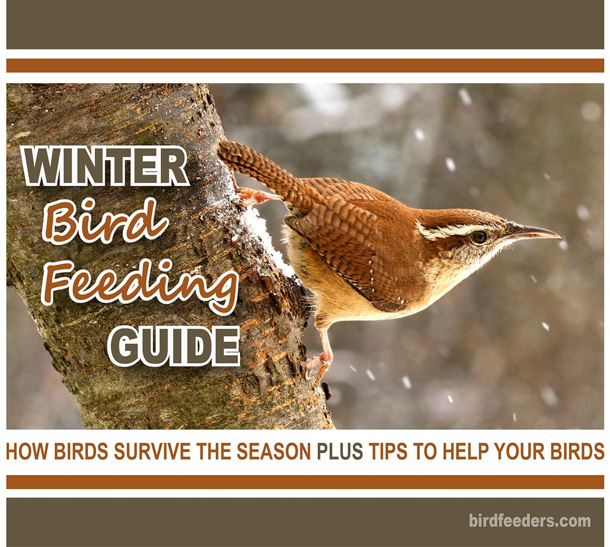 Winter bird feeding guide -- Learn all about feeding birds in your backyard through the coldest months of the year. Tips on bird feeding, water for birds and facts on how birds survive the cold.