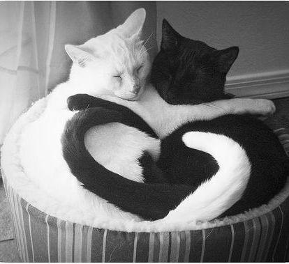 Cat Love.
