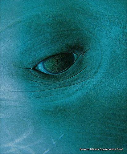 Dolphin Eye...stunningly beautiful <3