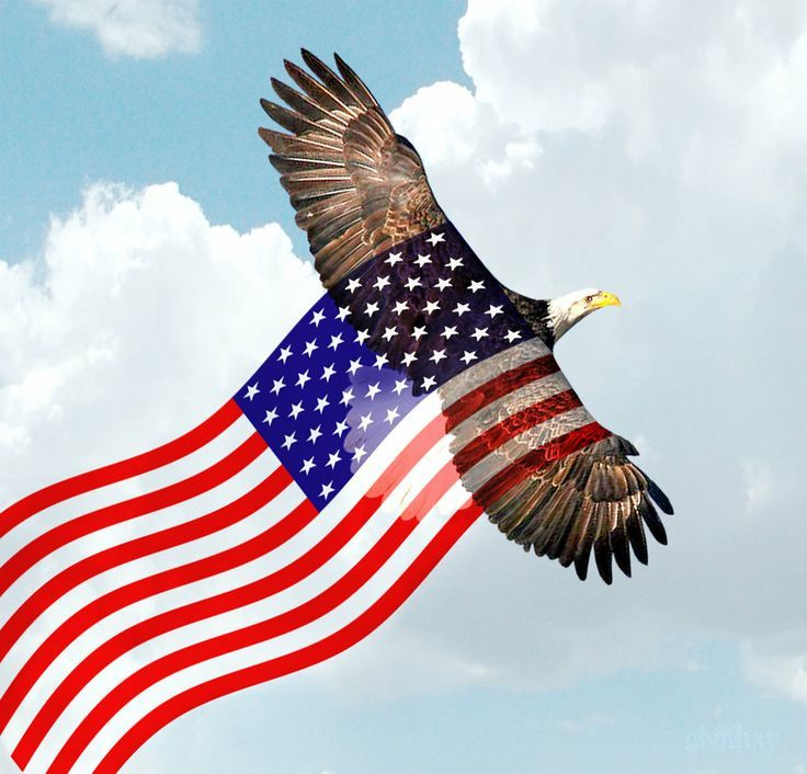 May 5 American Flag History Respectance Day American Flag Images Bald Eagle American Flag