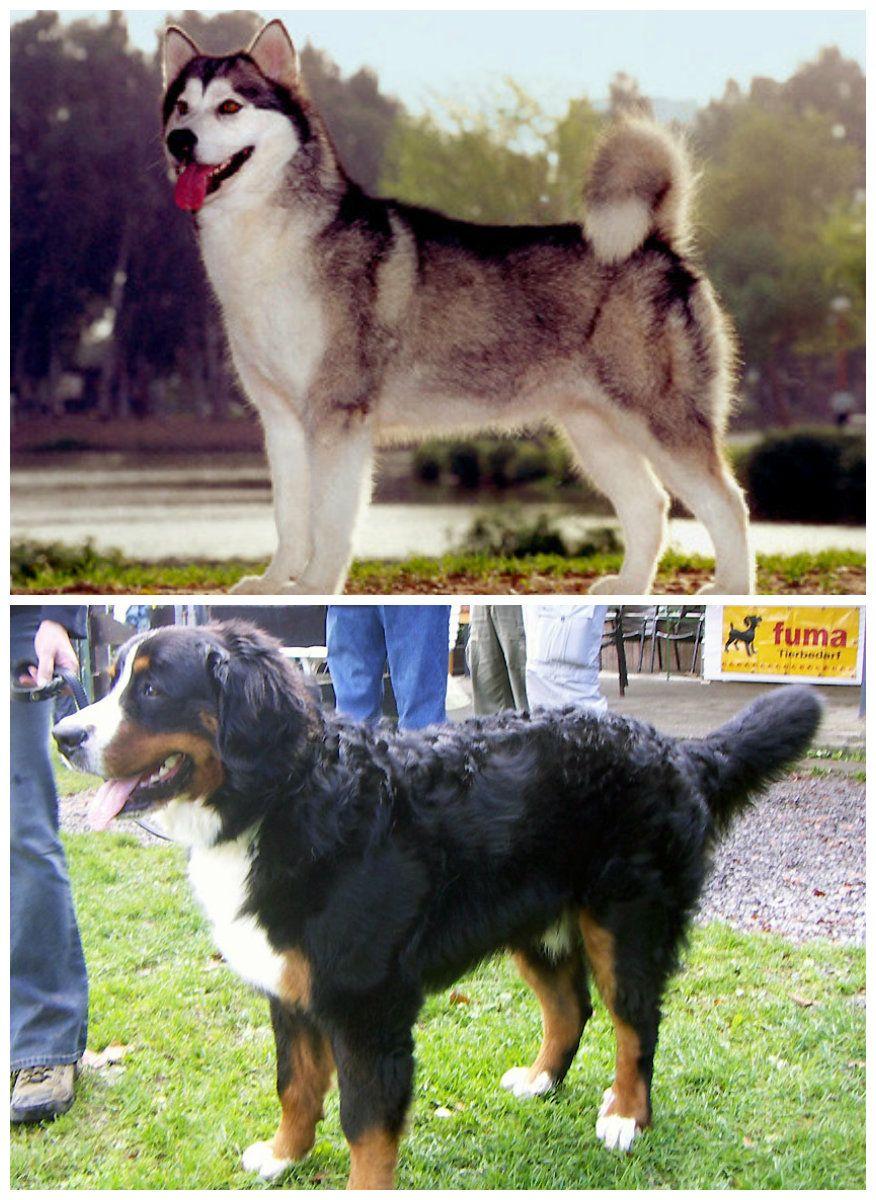 The Balto Statue In Real Life Love Alaskan Malamutes Dogs Dog