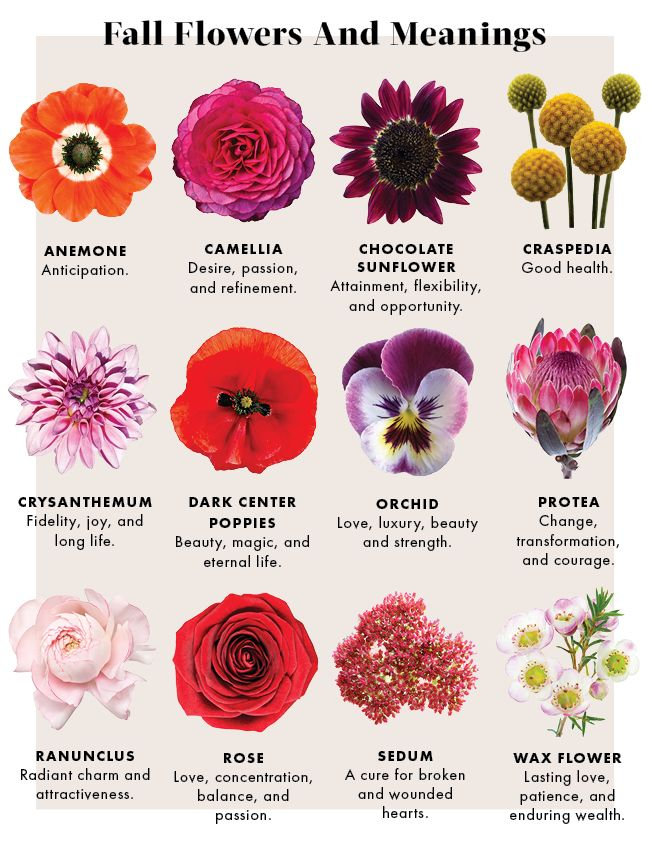 66c721705 Learn the Meanings of Fall Flowers | Quaint Quotes | Flower meanings ...