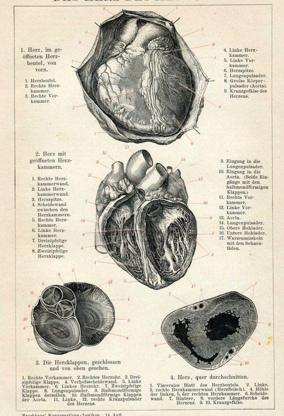 Grabado del corazón de un libro alemán de medicina (1894)