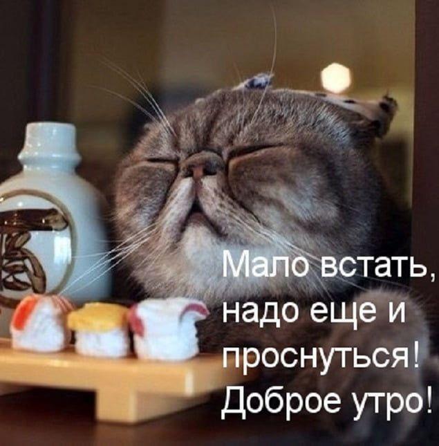 Картинки «доброе утро, котенок» (43 ФОТО) в 2020 г (с ...