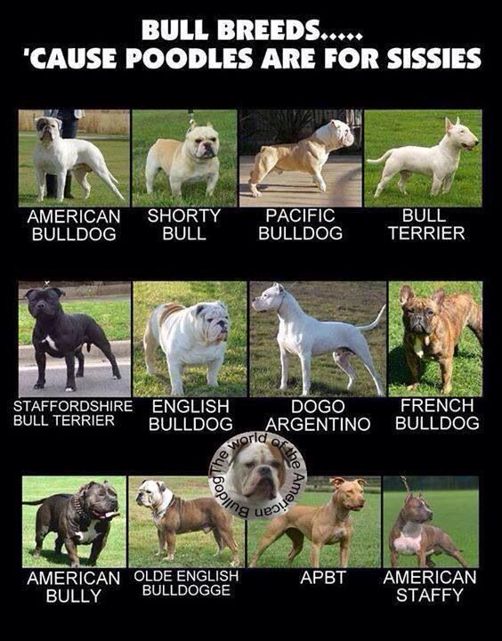 Types Of Dog Breeds Types Breeds Arten Von Hunderassen Types De Races De Chiens Tipos De Razas De Perros In 2020 Dog Breeds Types Of Dogs Breeds Bulldog Breeds