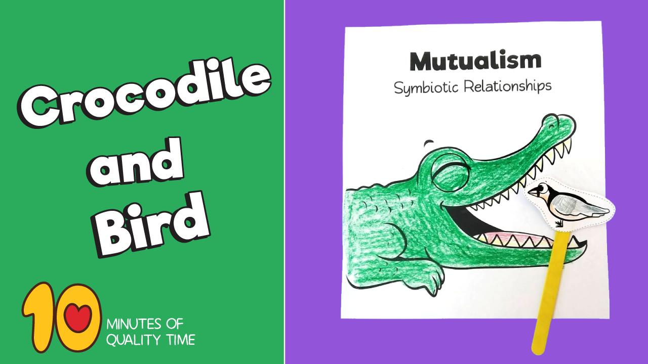 Symbiotic Relationship Between The Crocodile And The Plover Bird Video Symbiotic Relationships Activities Relationship Crafts Symbiotic Relationships [ 720 x 1280 Pixel ]