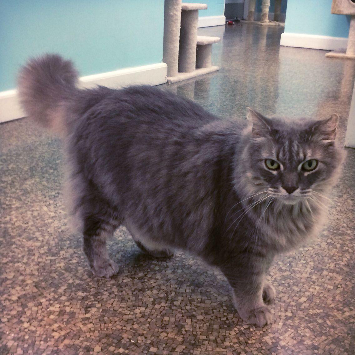 Adopt Smokey On Crazy Cats Crazy Cat Lady Adoption
