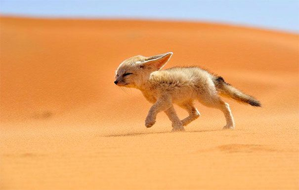 Huh Look At These Photos And You Will NEVER Look At Foxes The Same Way Again