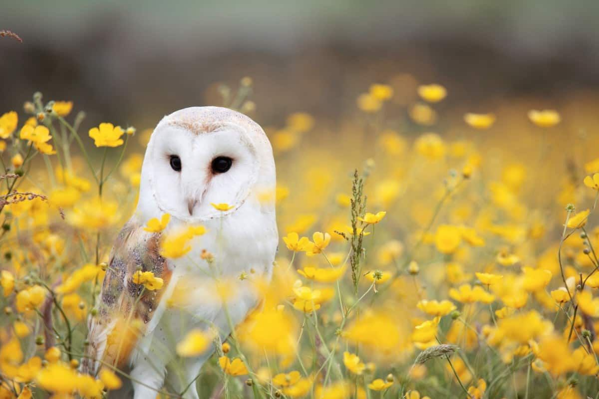55 Stunning Wildlife And Animal Wallpapers For All Animal Lovers