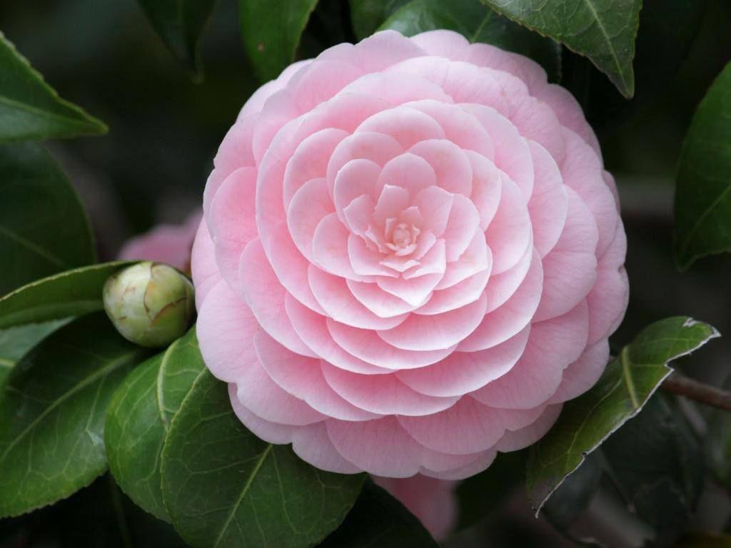 Lovely flower for sure <3