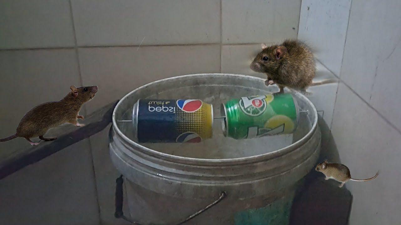 Best Mouse Trap Reviews Walmart Mouse Traps Best Mouse Trap Best Mouse