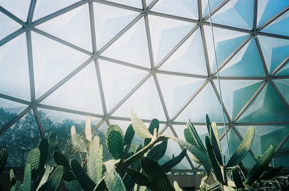 Cactus by pchph
