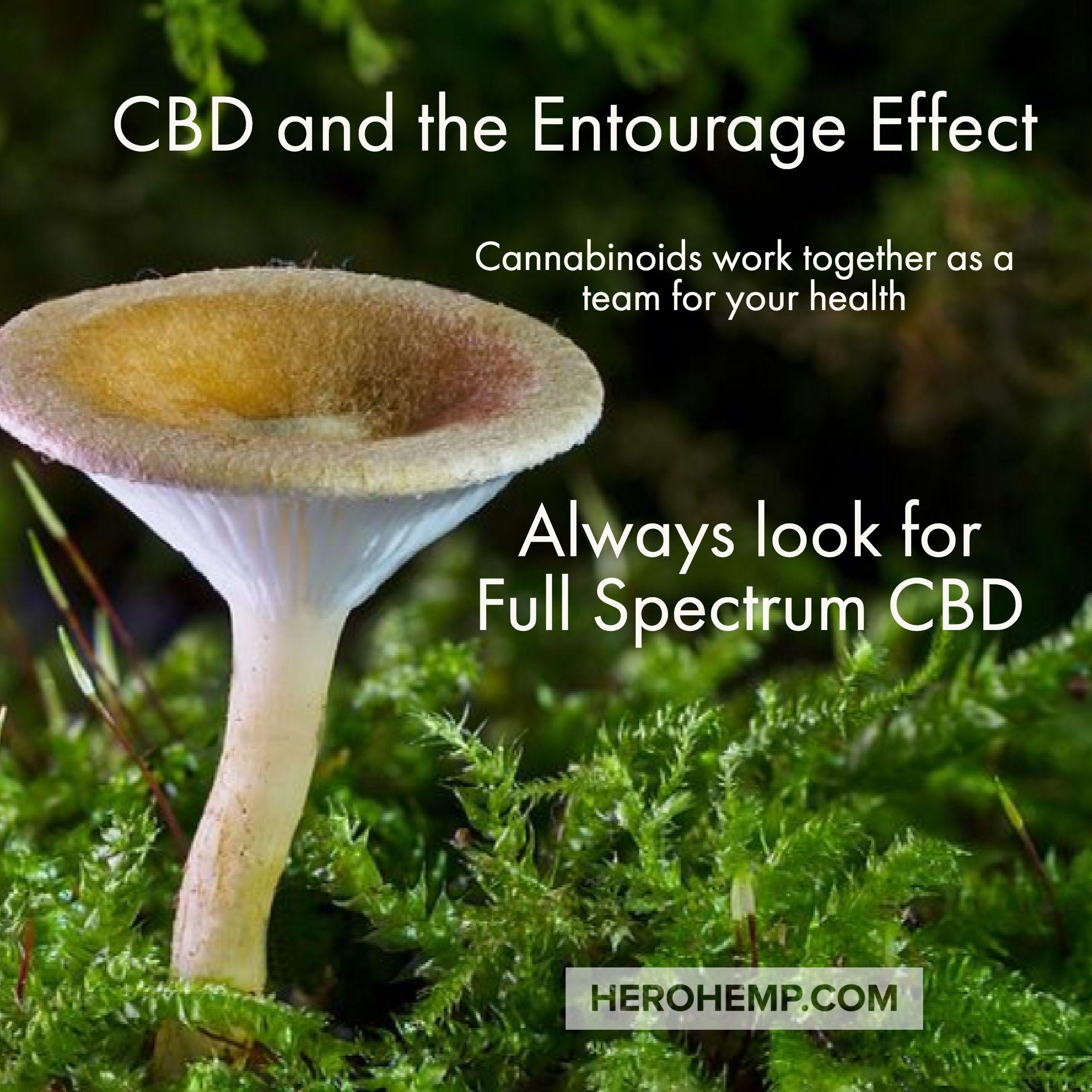 Cannabinoids, Health, For your health