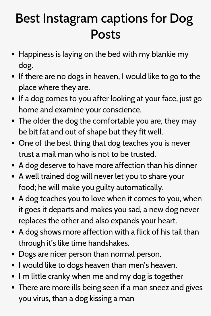 Best Instagram Captions For Dog Posts Good Instagram Captions Dog Instagram Captions Instagram Captions Clever