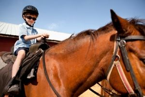 Saddle up! Explore nature by horseback at these St. Louis-area stables