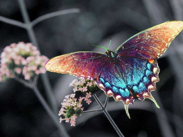 Top 14 Most Beautiful Butterflies in the World [Amazing Colors & Shapes] |  Most beautiful butterfly, Beautiful butterflies, Insects