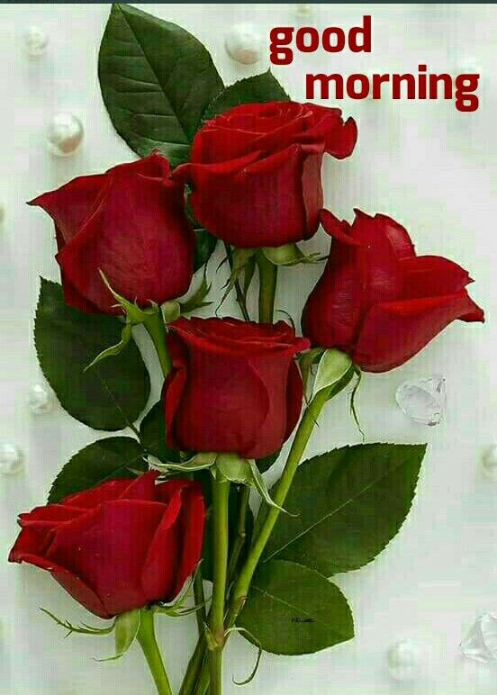 Good Morning Beautiful Red Roses Beautiful Flowers Wallpapers Beautiful Rose Flowers