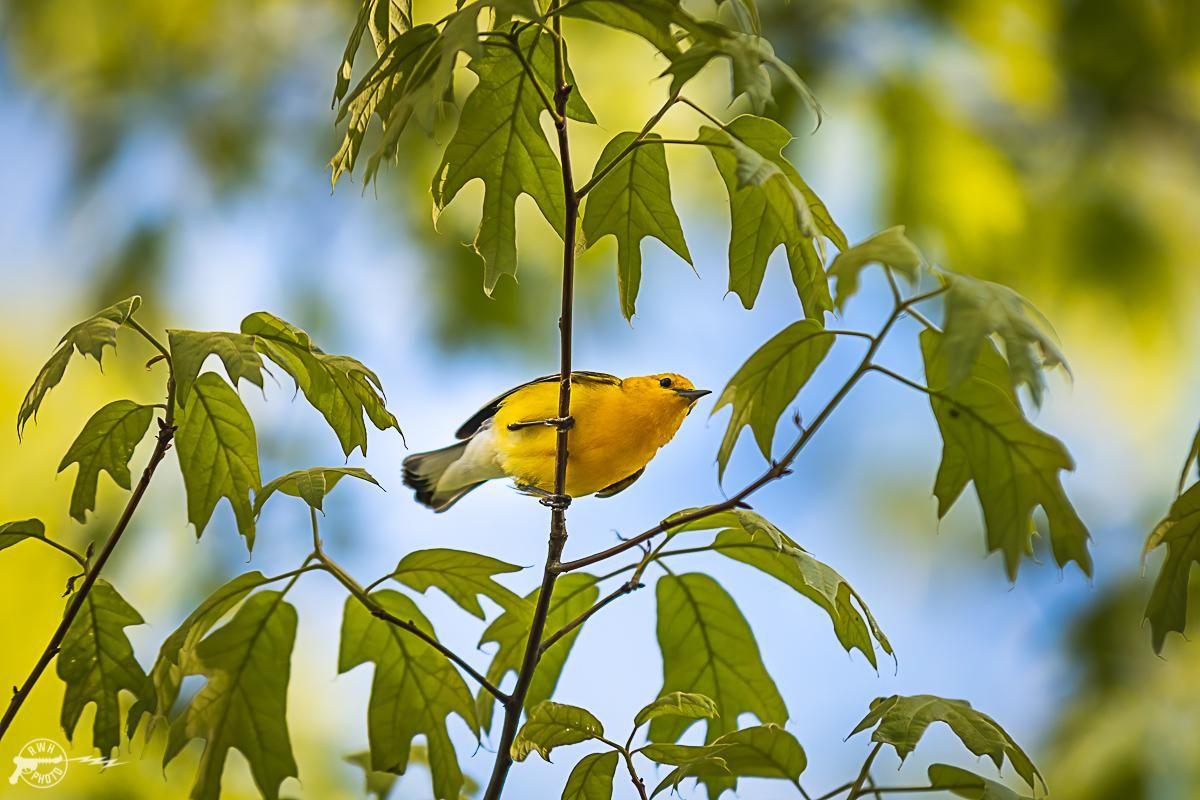 Pin On Free As A Bird