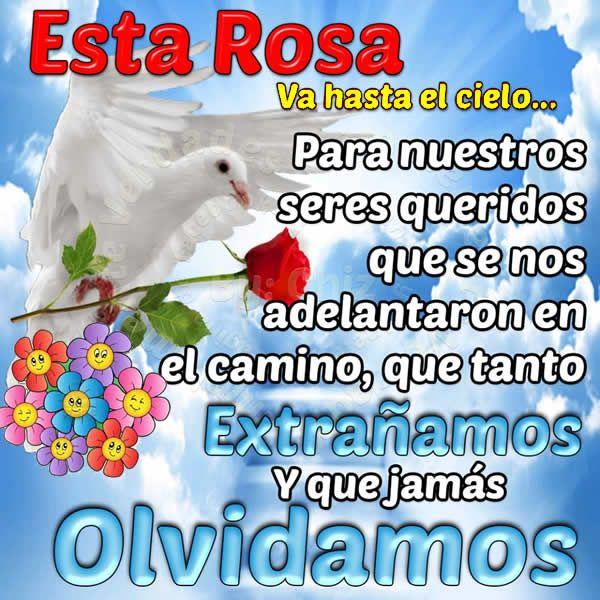 Esta rosa va hasta el cielo, para nuestros seres queridos que se nos adelantaron en el camino, que tanto extrañamos y que jamás olvidamos. Adelantar es sit