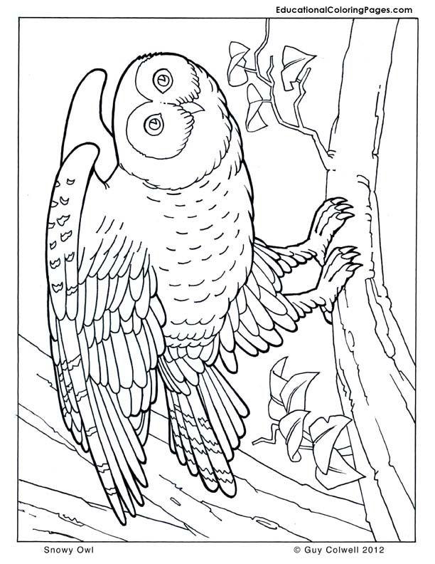 owl coloring page | Random coloring | Pinterest | Brillo, Familias y ...