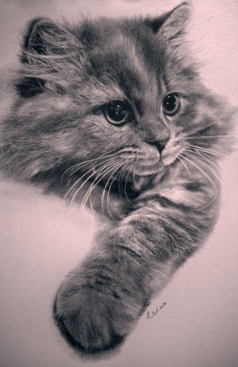 Phänomenale Fotorealistische Bleistift-Zeichnungen von Katzen - My Modern Met