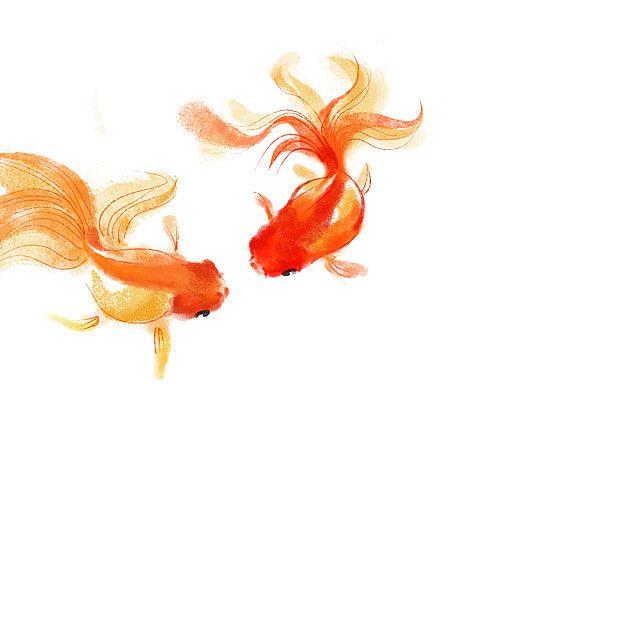 My Goldfish Fish Art Watercolor Fish Fish Drawings