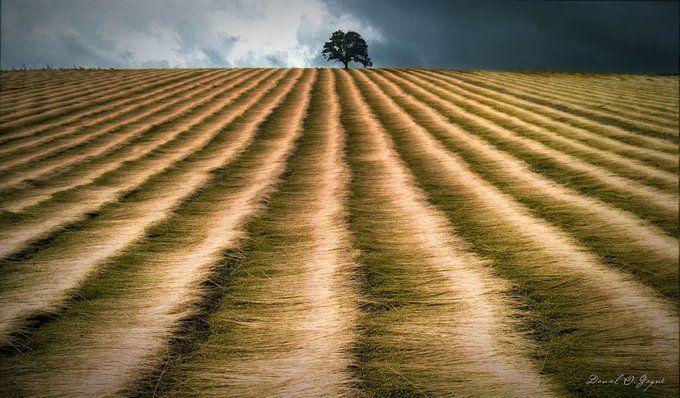 The harvest & a tree #photographytalk #field