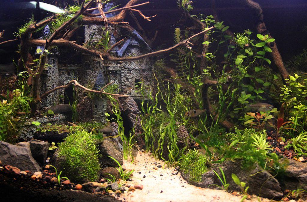 Castle Tropical Fish Aquarium Fish Tank Themes Aquarium Fish Tank