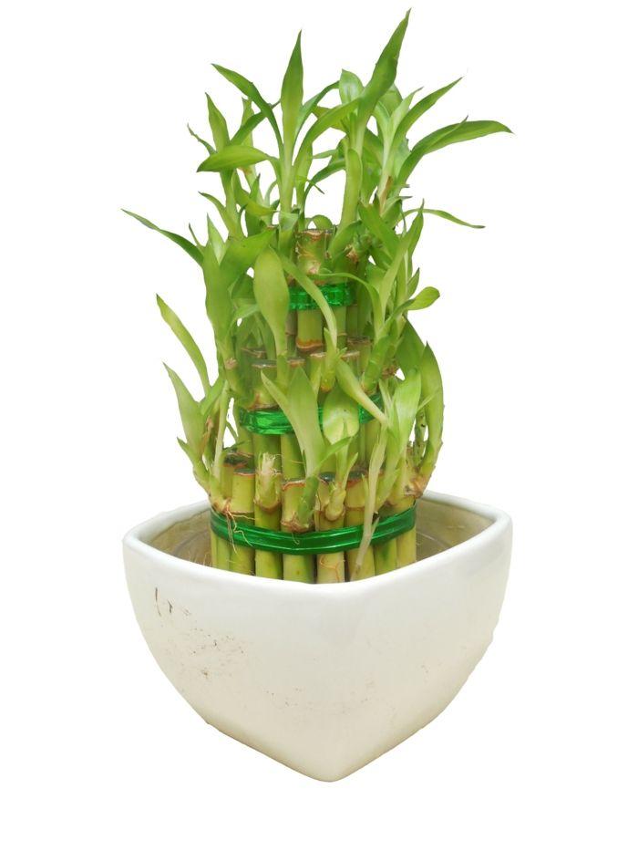 zimmerpflanzen die gl ck bringen pflanzenideen pinterest pflegeleichte zimmerpflanzen. Black Bedroom Furniture Sets. Home Design Ideas