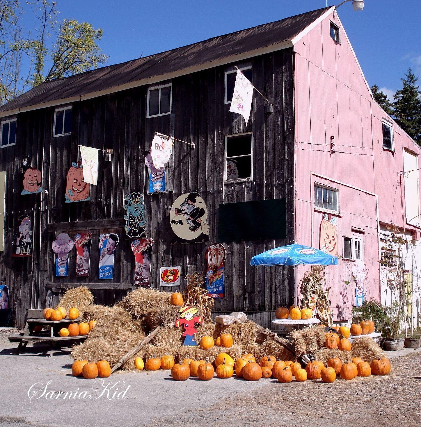 At Leggs in Birr, Ontario Autumn photography, Pumpkin