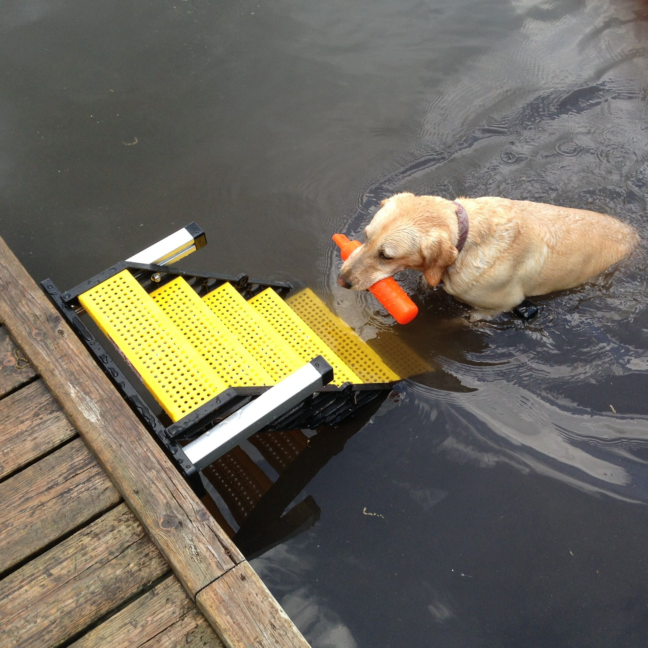 Sadie with WAG Boarding Steps™ Model DM-12 | WAG Users Group
