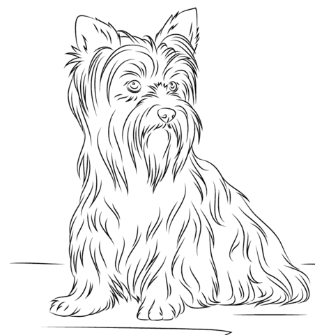 Yorkshire Terrier Coloring Page From Dogs Category Select From 23049 Printable Crafts Of Cartoon Dog Coloring Page Yorkshire Terrier Yorkshire Terrier Puppies
