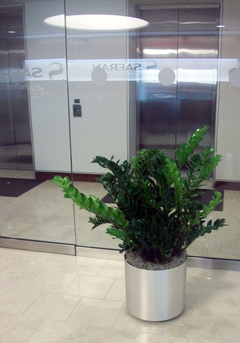 Design By Creative Interior Plantscapes
