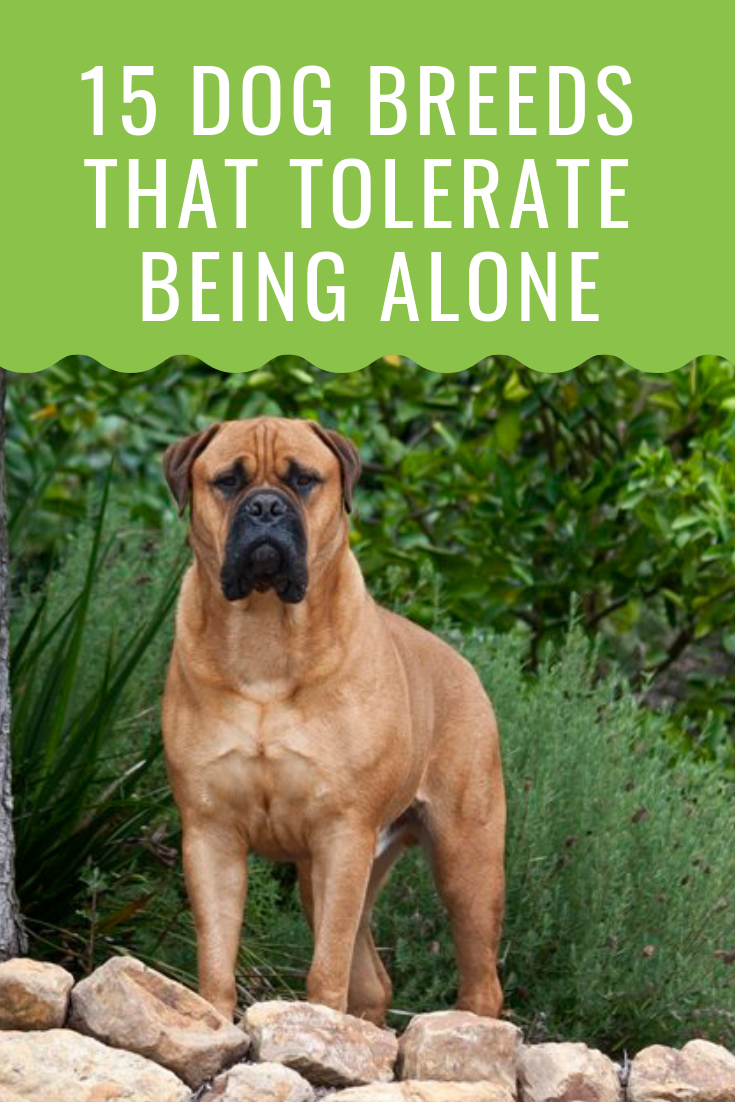 20 Dogs That Can Be Left Alone Barking Royalty Dog Breeds Dogs 15 Dogs