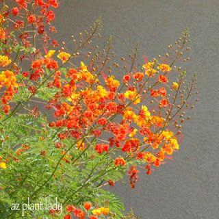 Plants For An AZ Hummingbird/butterfly Garden