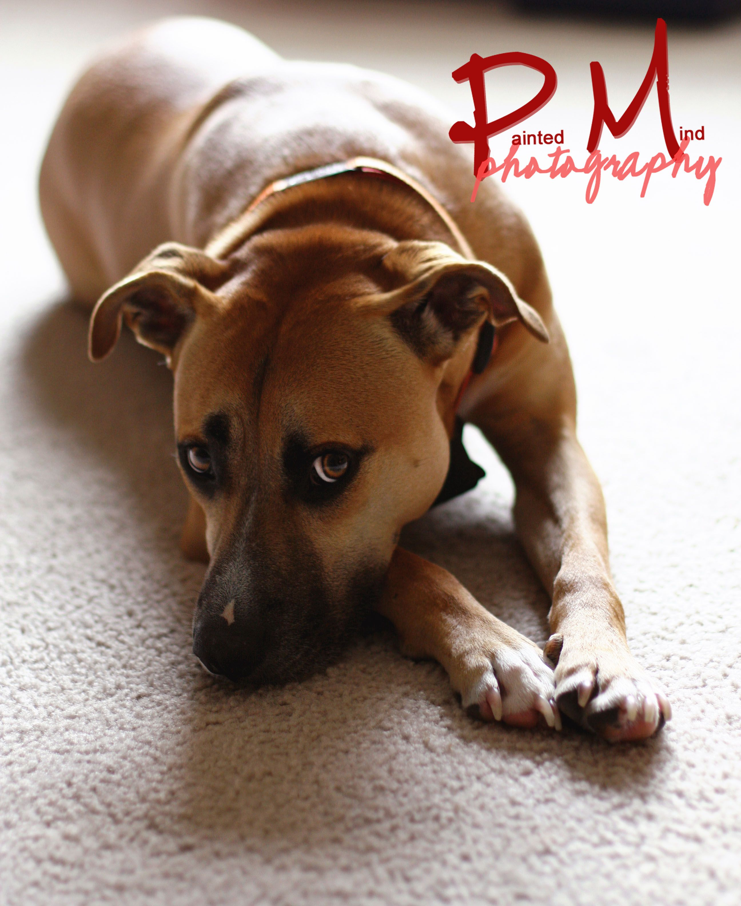 Pin by Stacy Capone on Puppy dogs Black mouth cur dog