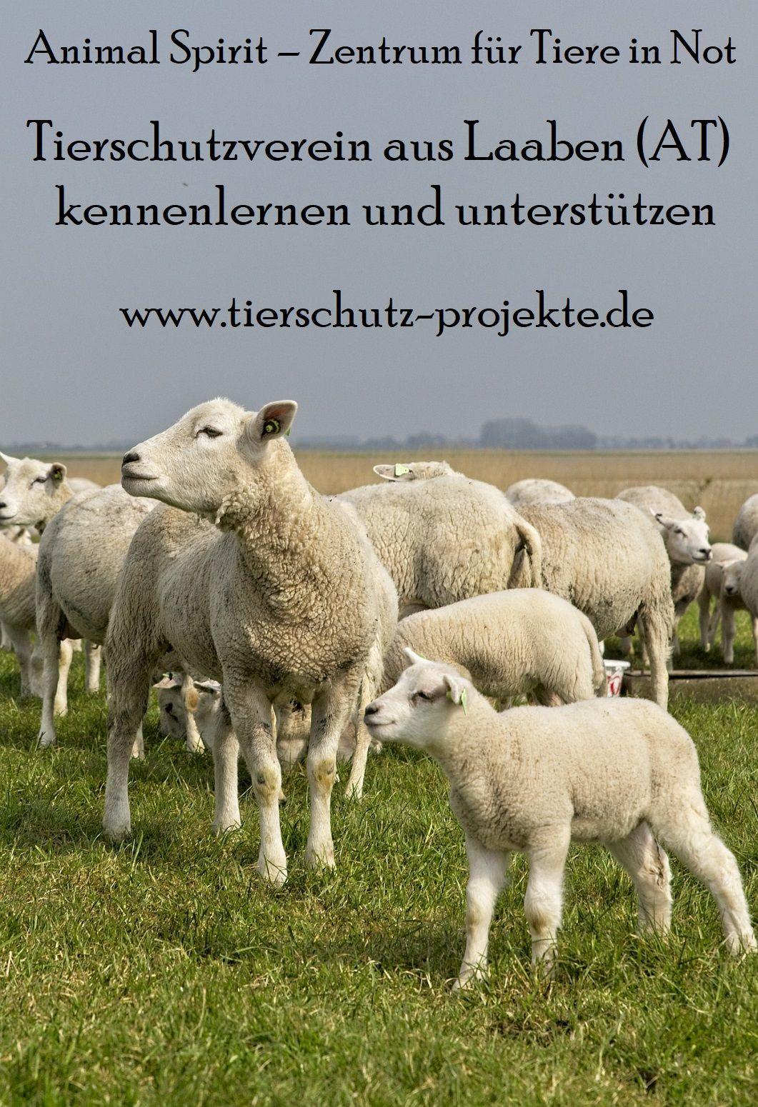 Pin Auf Tierschutz Projekte