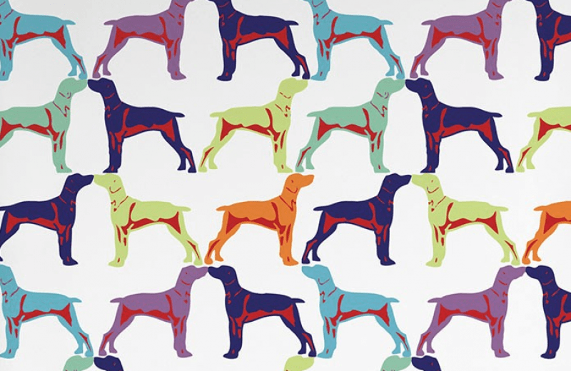 Pin By Paige Neagle On Woofersss In 2020 Dog Wallpaper Dog Themed Colorful Dog
