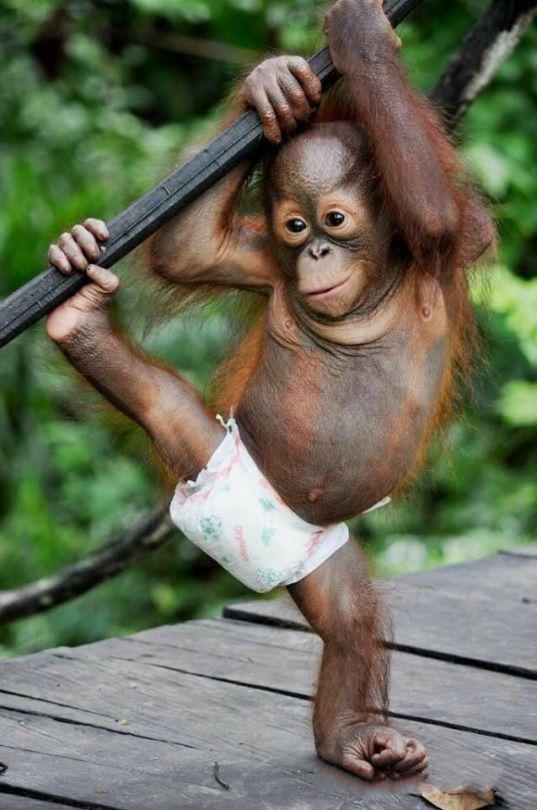 Смешные картинки про обезьянок