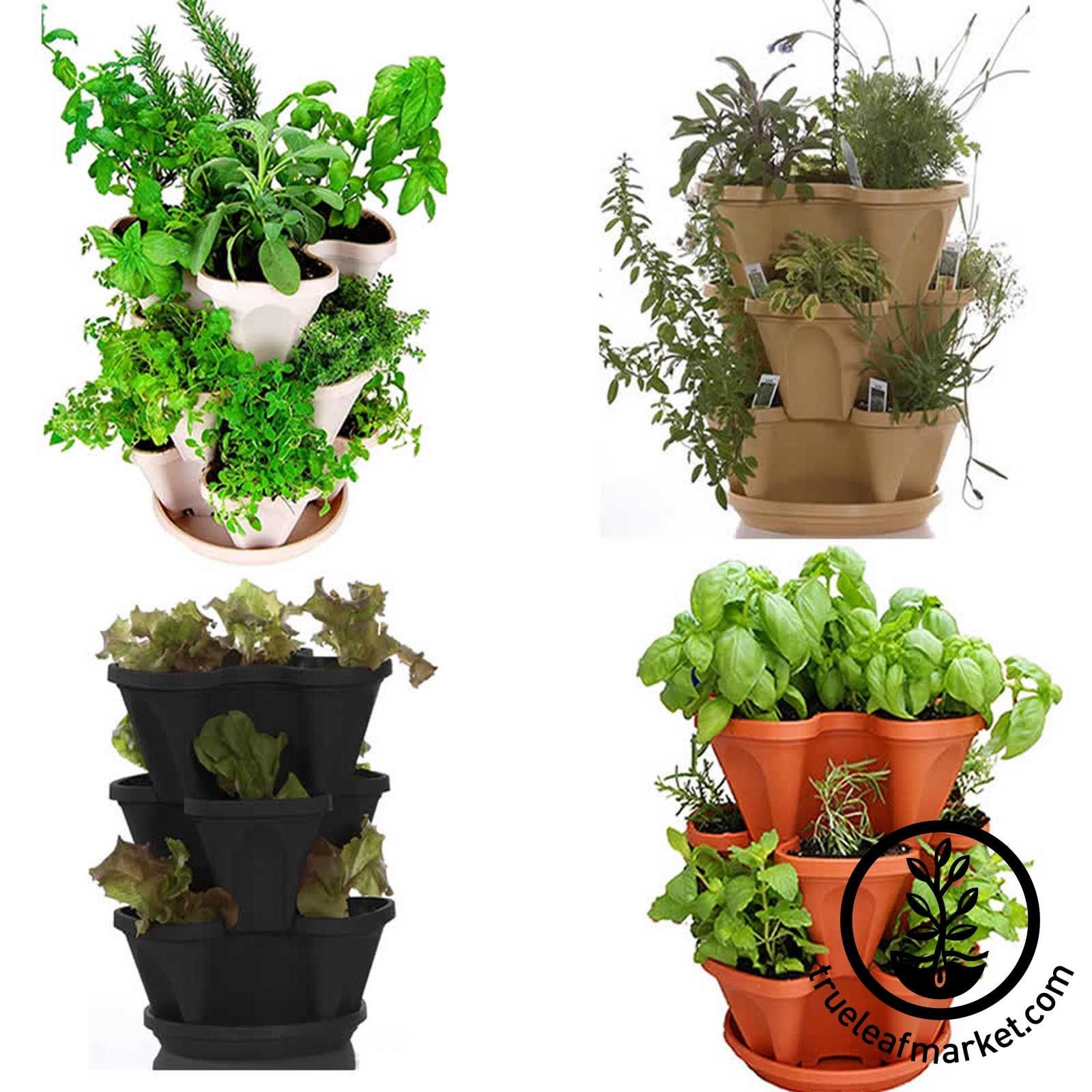 Culinary Herb Garden Kit U0026 Stackable Planter | Grow Cooking Herbs