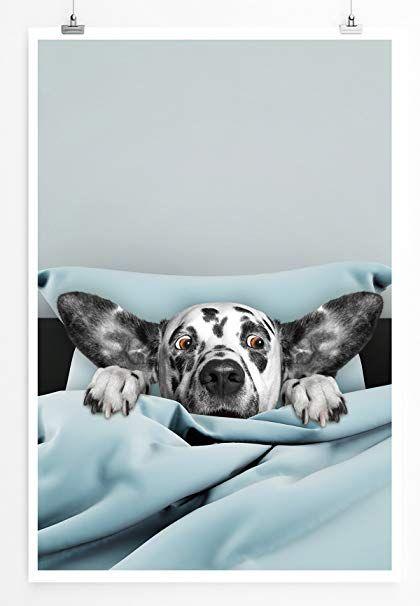 Eau Zone Bilder Bild Süßer Dalmatiner im Bett